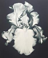 LOWELL NESBITT, Flower Screenprint, Rare Artists Proof
