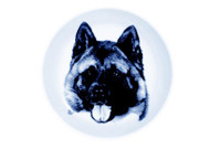 Akita Face Danish Blue Dog Plate
