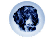 Dachshund (Wire Haired) Face Danish Blue Dog Plate