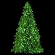 Paramount Pine Tree