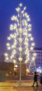 Tulita Giant Tree is 26.2' tall. This silhouette tree has warm white LED five pointed stars at the end of each branch.   180 watts and 24volts