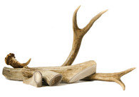 Large Antler Dog Chews