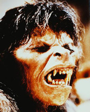 This is an image of 214363 American Werewolf in London Photograph & Poster