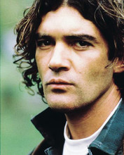 This is an image of 216798 Antonio Banderas Photograph & Poster