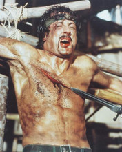 This is an image of 238979 Sylvester Stallone Photograph & Poster