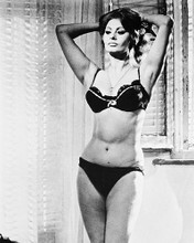 This is an image of 170613 Sophia Loren Photograph & Poster
