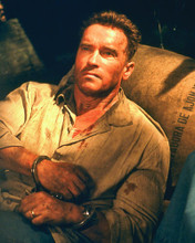 This is an image of 250864 Arnold Schwarzenegger Photograph & Poster