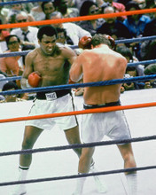 This is an image of 254247 Muhammad Ali Photograph & Poster