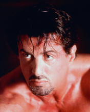 This is an image of 257441 Sylvester Stallone Photograph & Poster