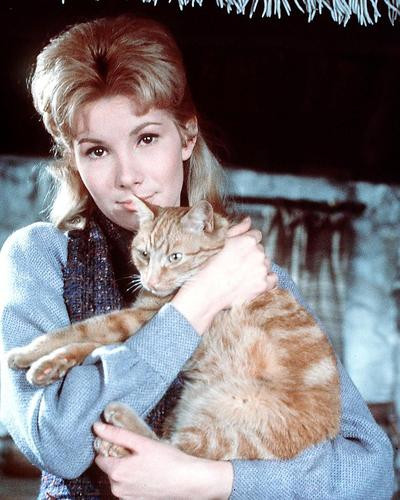 This is an image of 266373 Susan Hampshire Photograph & Poster