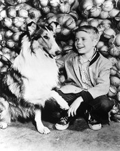This is an image of 179702 Lassie Photograph & Poster