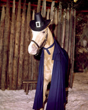 This is an image of 267453 Mr.Ed Photograph & Poster