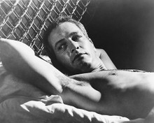 This is an image of 179331 Paul Newman Photograph & Poster