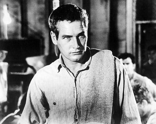 This is an image of 194444 Paul Newman Photograph & Poster