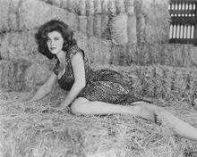 This is an image of 179176 Tina Louise Photograph & Poster