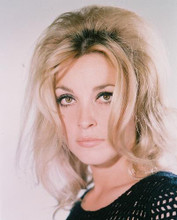 This is an image of 218480 Sharon Tate Photograph & Poster