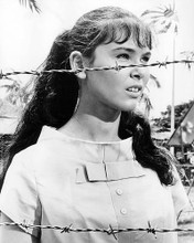This is an image of Photograph & Poster of Yvonne Craig 194650