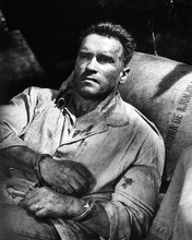 This is an image of Photograph & Poster of Arnold Schwarzenegger 195578