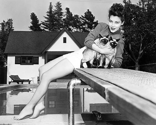 This is an image of Photograph & Poster of Ava Gardner 196487