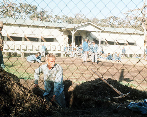 This is an image of Photograph & Poster of Cool Hand Luke 290661