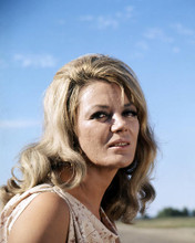 This is an image of Photograph & Poster of Sheree North 291172