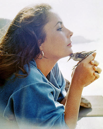 This is an image of Photograph & Poster of Elizabeth Taylor 291270
