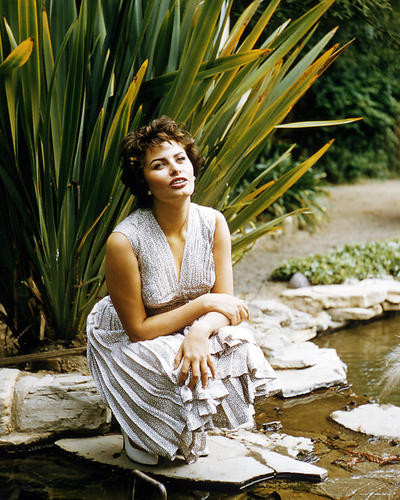 This is an image of Photograph & Poster of Sophia Loren 291409
