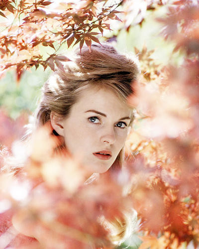 This is an image of Photograph & Poster of Jean Seberg 293339