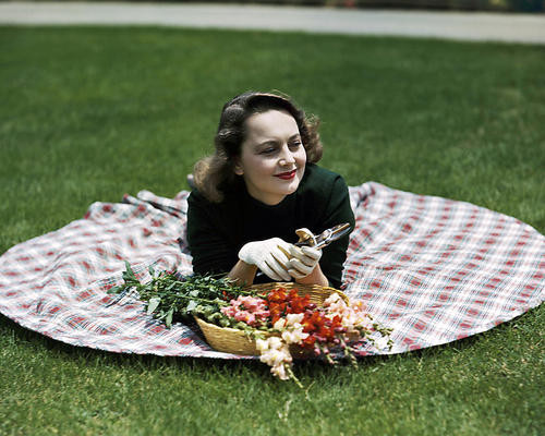 This is an image of Photograph & Poster of Olivia De Havilland 293370
