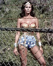 This is an image of Photograph & Poster of Lynda Carter 295899