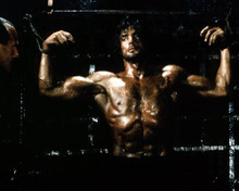 This is an image of Premium Photograph & Poster of Sylvester Stallone 296649