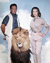 This is an image of Photograph & Poster of The Lion 296702