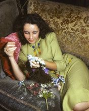 This is an image of Premium Photograph & Poster of Elizabeth Taylor 297256