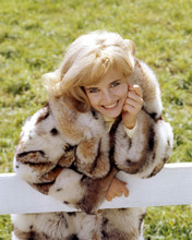 This is an image of Photograph & Poster of Sue Lyon 296806