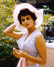 This is an image of Premium Photograph & Poster of Sophia Loren 297462