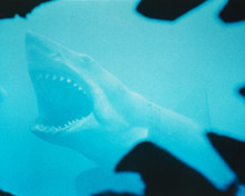 This is an image of Photograph & Poster of Jaws 297722