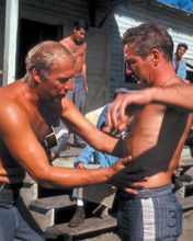 This is an image of Photograph & Poster of Cool Hand Luke 298230