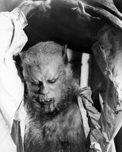 This is an image of Photograph & Poster of Curse of the Werewolf 196476