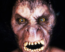 This is an image of Photograph & Poster of American Werewolf in London 286493