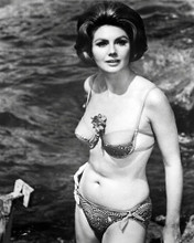 This is an image of Photograph & Poster of Sylva Koscina 197333
