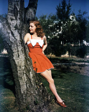 This is an image of Photograph & Poster of Ann Sheridan 289962