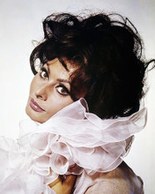 This is an image of Photograph & Poster of Sophia Loren 288996
