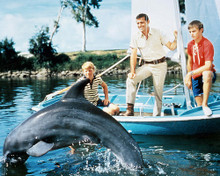 This is an image of Photograph & Poster of Flipper 289422