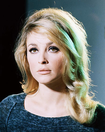 This is an image of Photograph & Poster of Sharon Tate 289430