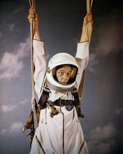 This is an image of Photograph & Poster of Don Knotts 289799