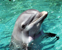 This is an image of Photograph & Poster of Flipper 289884