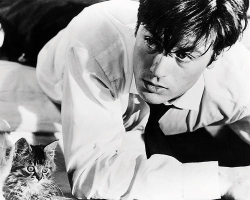 This is an image of Photograph & Poster of Alain Delon 198784