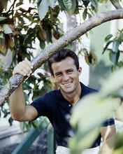 This is an image of Photograph & Poster of Robert Conrad 290335