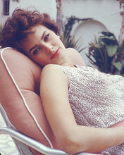 This is an image of 266068 Sophia Loren Photograph & Poster