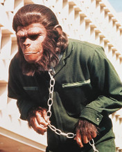 This is an image of 282492 Conquest of the Planet of the Apes Photograph & Poster